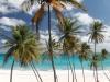 Kitespot auf Barbados
